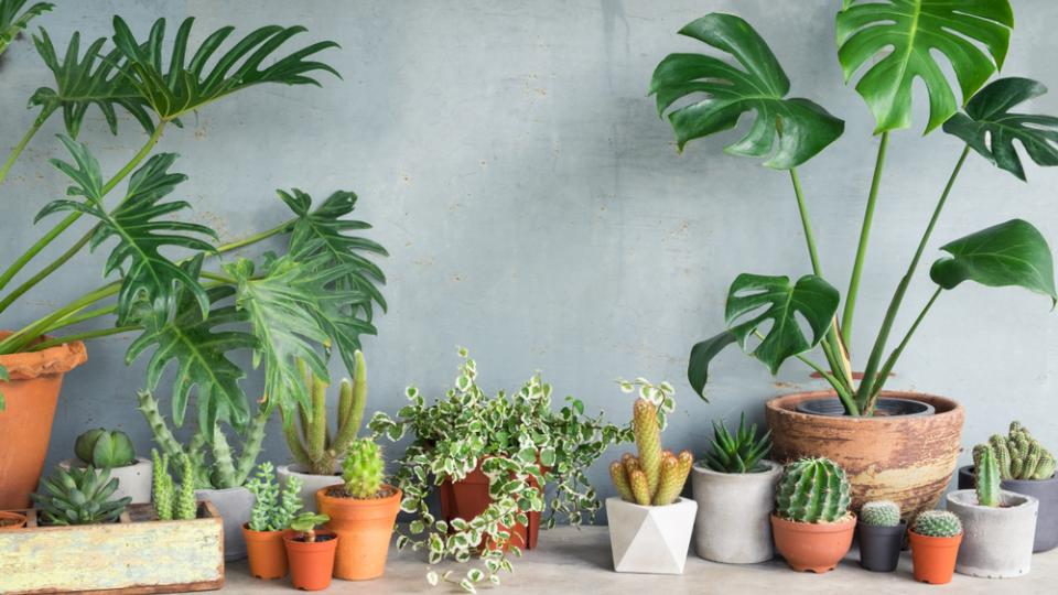 Plantes Depolluantes Les 6 Incontournables Pour Un Interieur Sain Magazine M6meteo