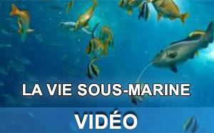 Vidéo sur la vie sous-marine